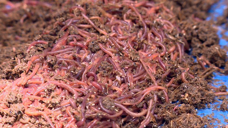 Thức Ăn Cho Lươn. Thức Ăn Tự Nhiên & Thức Ăn Công Nghiệp Cho Lươn - Kỹ  Thuật Canh Tác